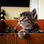 Top Tips When Moving House With Your Cat